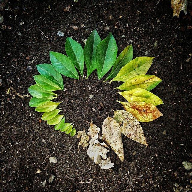 Spring Nature Activities For Preschoolers