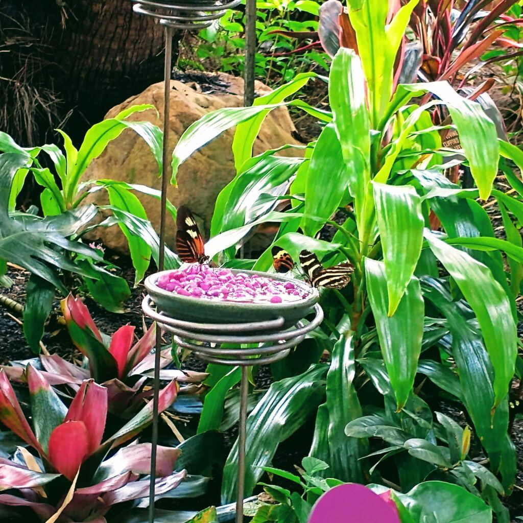 Frederik Meijer Gardens (Grand Rapids, MI) Family Guide - Best Kid-Friendly Spots - Butterflies Are Blooming