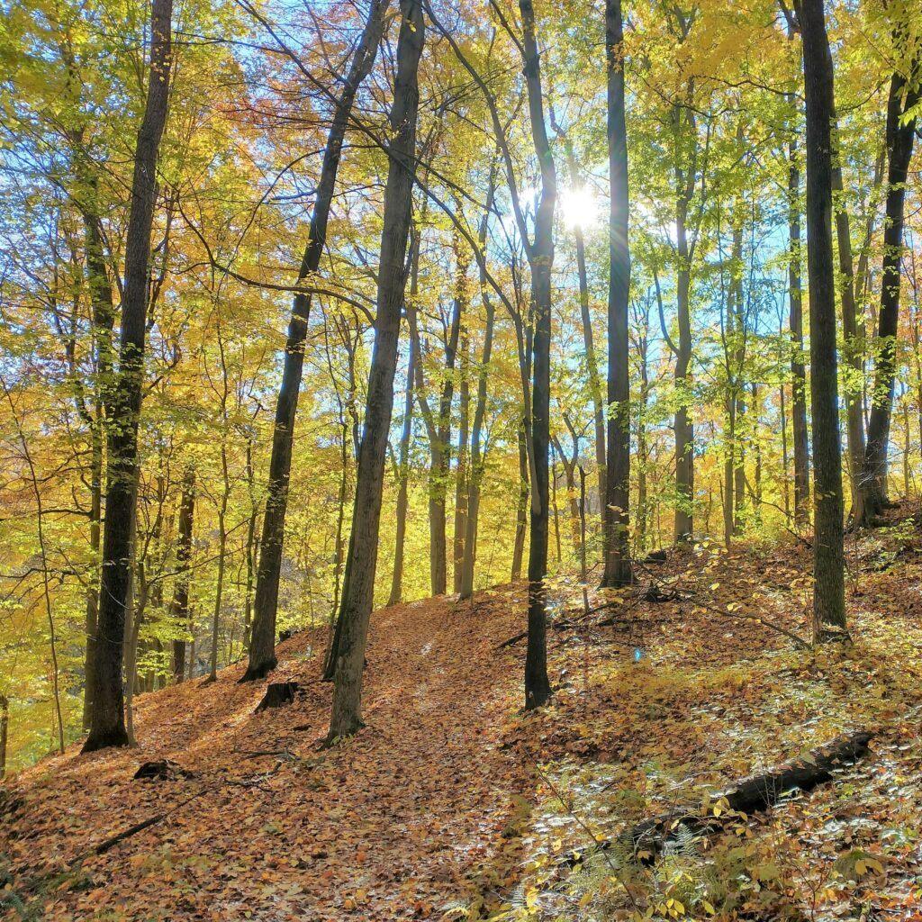 Earth Day Vs. Arbor Day - History & Ways to Celebrate - Grand Ravines Park in Jenison, Michigan