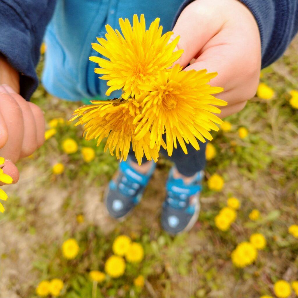 Fun Dandelion Facts For Kids