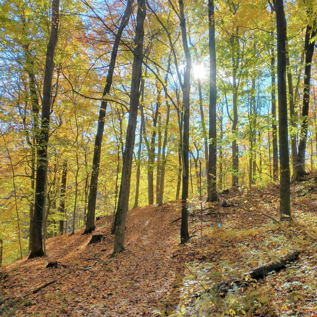 Hike West Michigan: Best Ottawa County Trails - Grand Ravines