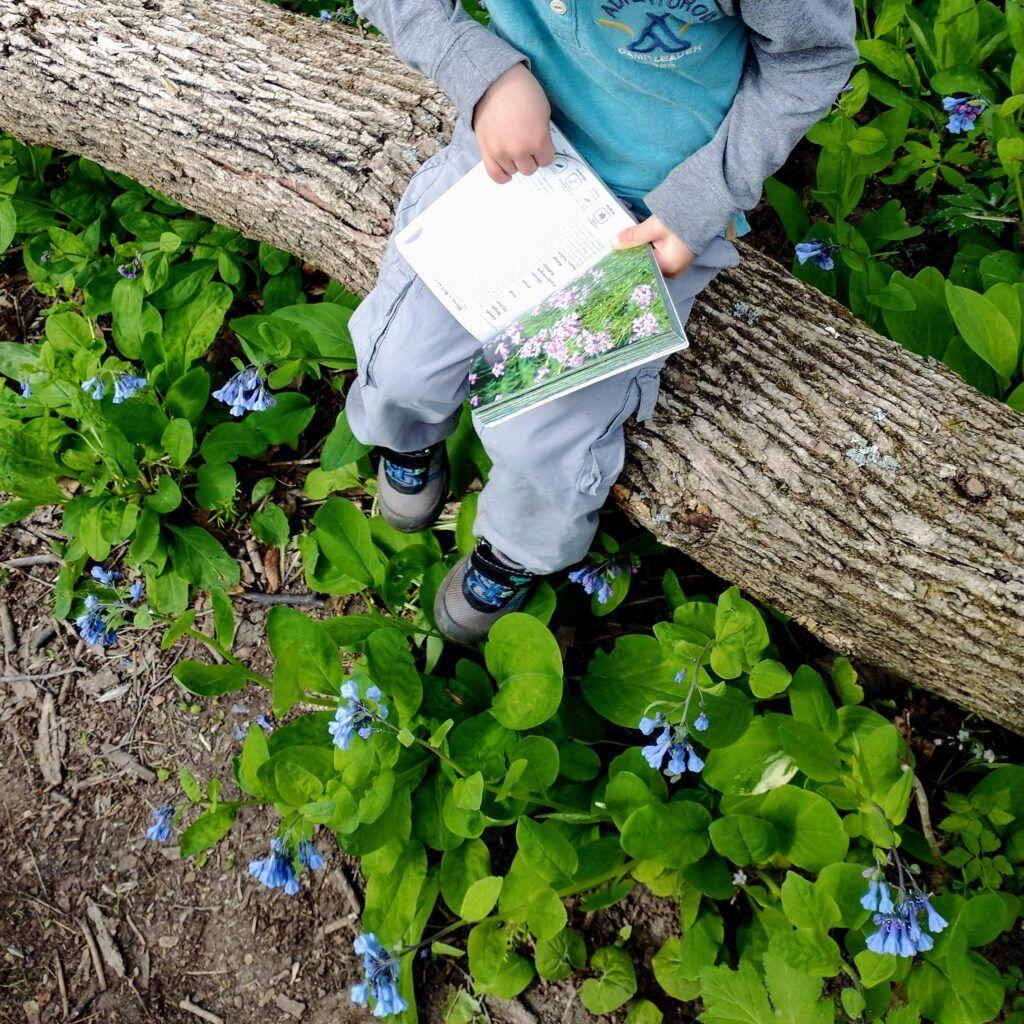 Short & Sweet Nature Poems For Children