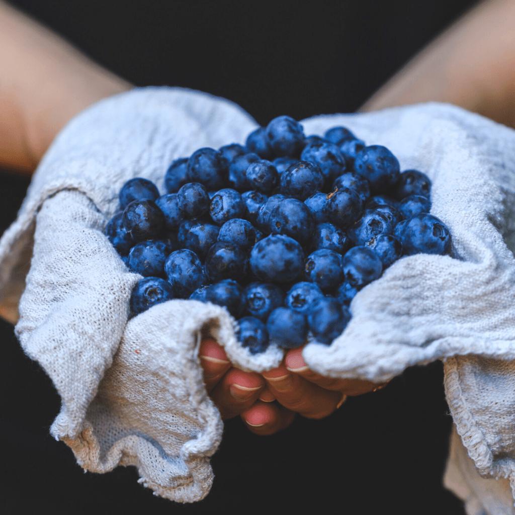 Where To Pick Organic Berries In Michigan - U-Pick Blueberry, Strawberry, Raspberry, Cherry Farms