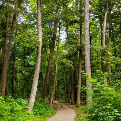 5 Amazing Benefits of Old Growth Forests