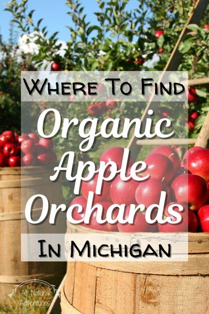 Visit An Organic Apple Orchard For Michigan Fall Magic