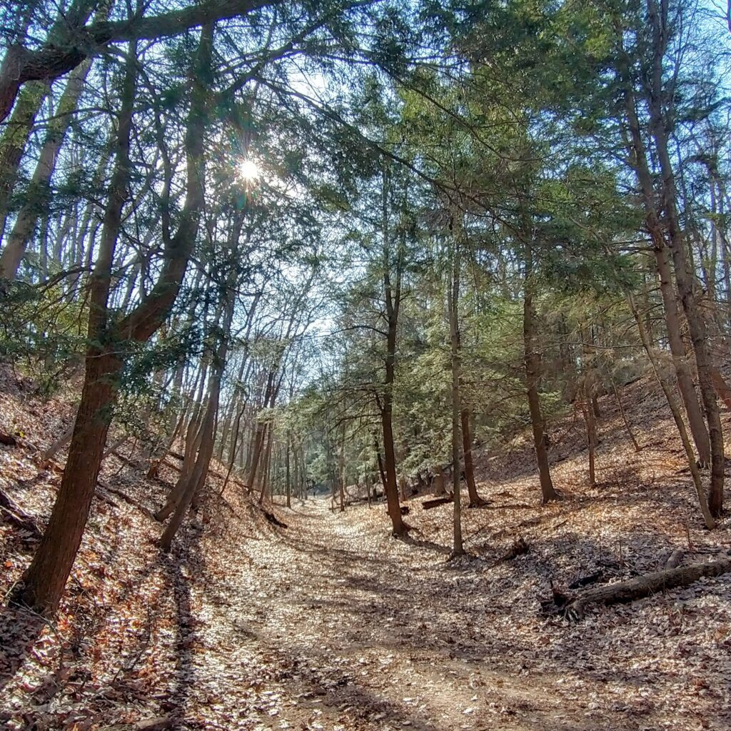3 Must See Spectacular Hikes In Saugatuck, Michigan - Saugatuck Dunes State Park