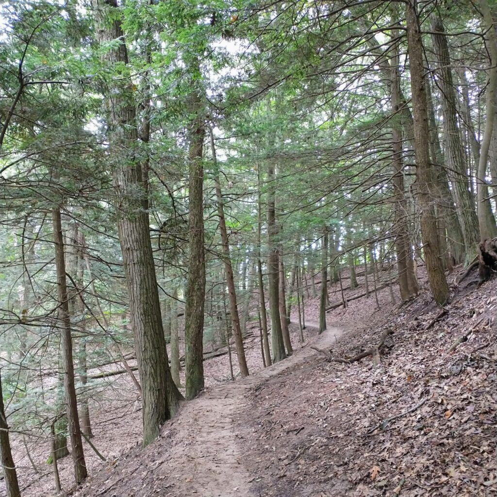 3 Must See Spectacular Hikes In Saugatuck, Michigan - Crow's Nest Trail