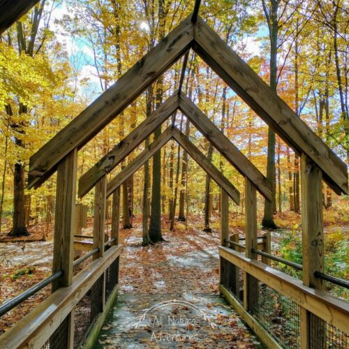 Beautiful Places to Photograph at the Grand Ravines Park - Ottawa County, West Michigan